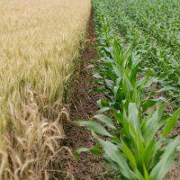 rural-financing-farm-loans-98915